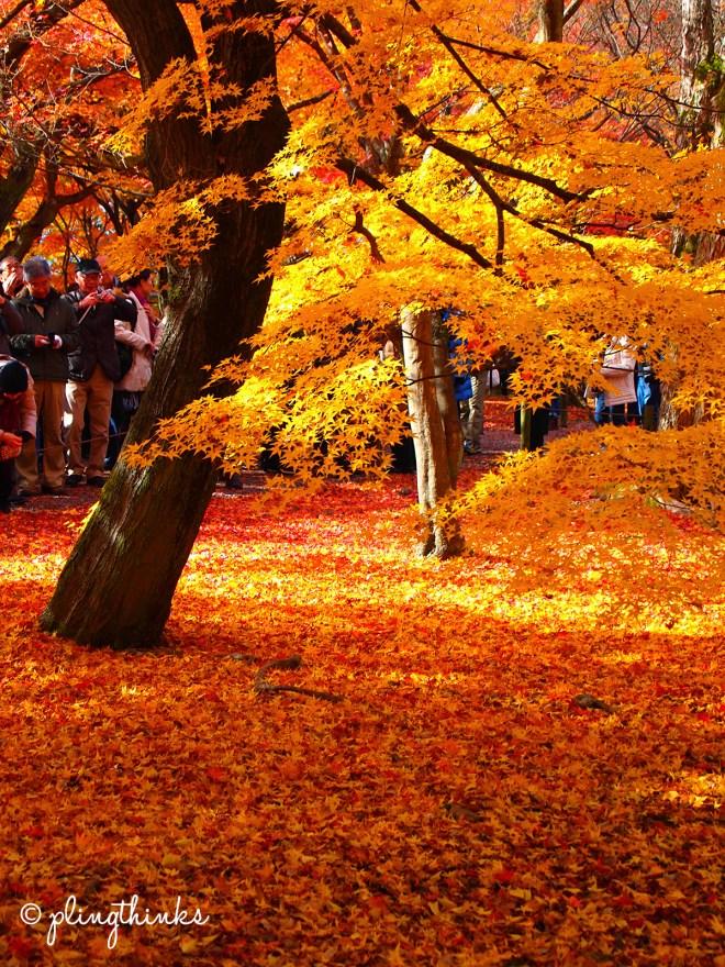 Tofukuji - Under the Maple Trees - Kyoto