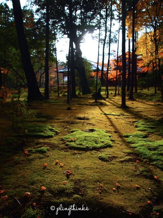Light Shadow Trees in Moss Garden - Kokedera Kyoto
