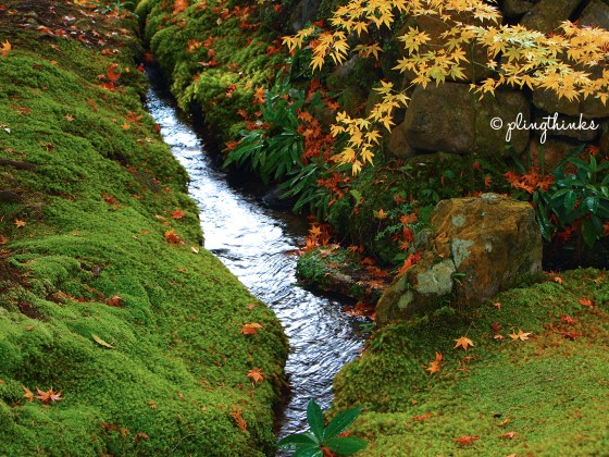 Babbling Brook in Moss Garden - Autumn Kyoto