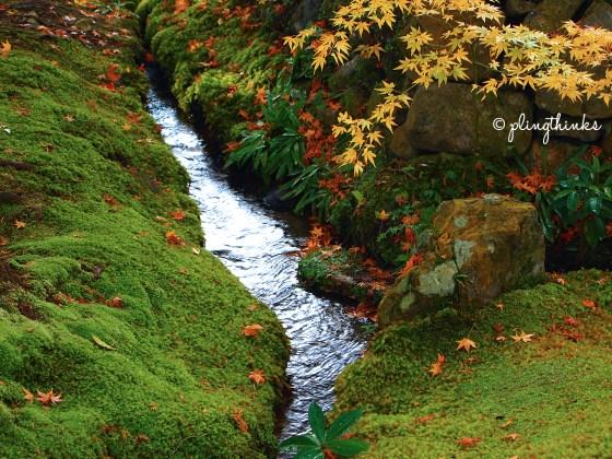 Babbling Brook in Moss Garden - Autumn Kyoto