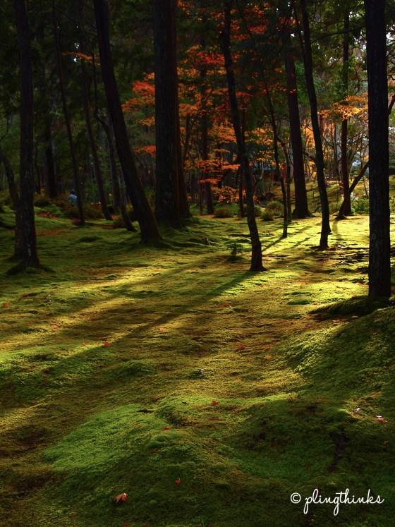 Light Shadow Play in Moss Garden - Kokedera Kyoto
