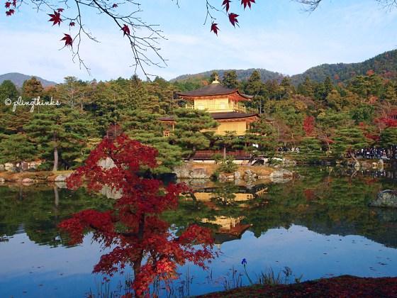 Autumn in Golden Temple Pavilion Kinkaku-ji - Kyoto