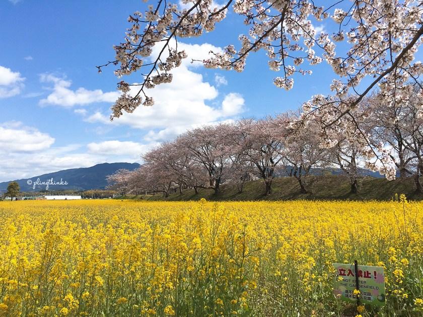 Fujiwara Palace Ruin - Sign Flower Field