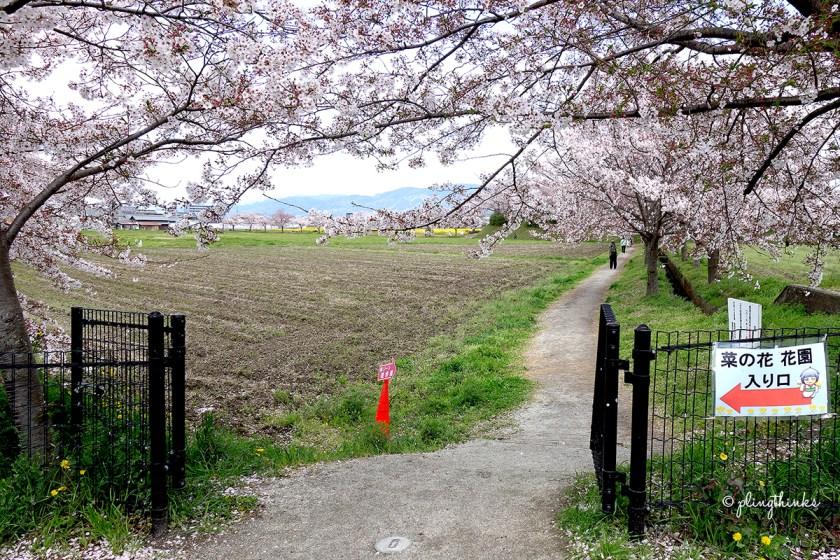 Fujiwara Palace Ruins Nara - Entrance of Cherry Blossoms