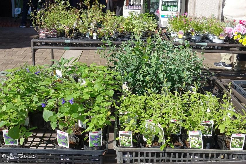 Herbs and Plants - Kobe Nunobiki Herb Gardens