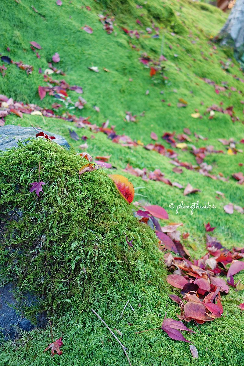 Moss at Jojakko Temple - Kyoto Arashiyama