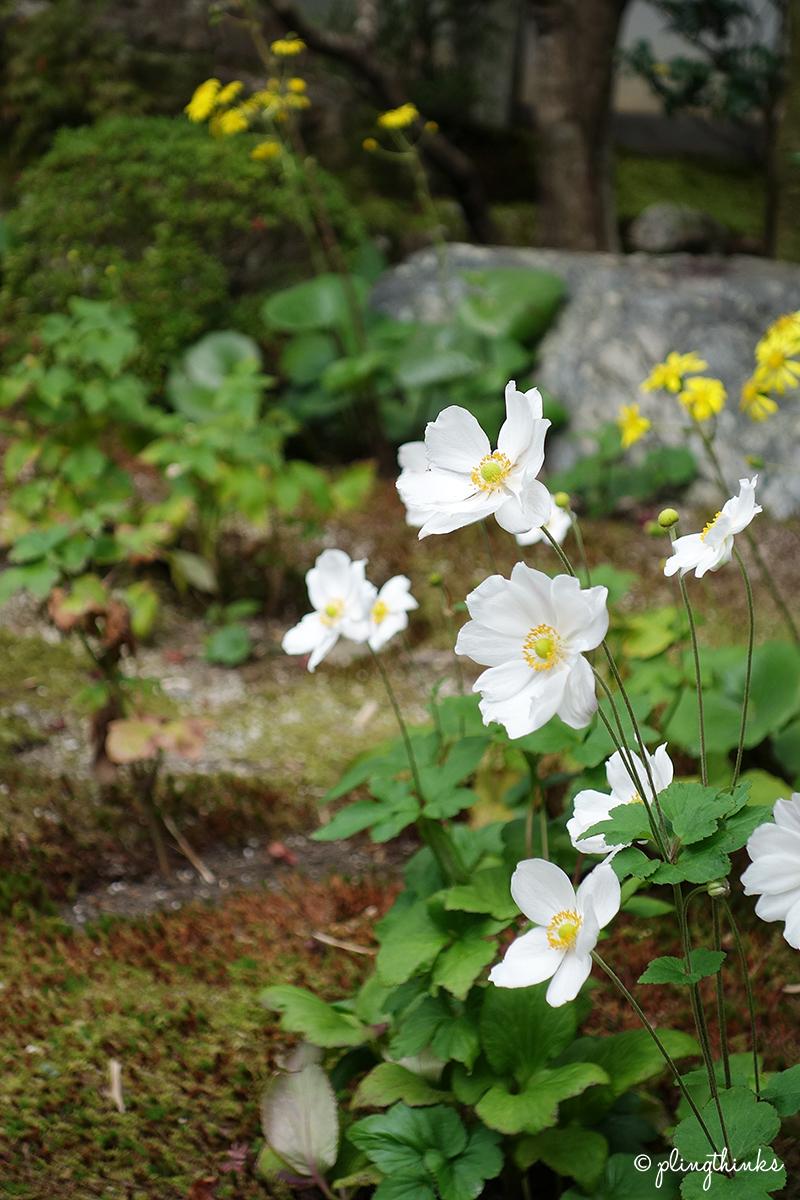 Tenjuan Garden - Flowers