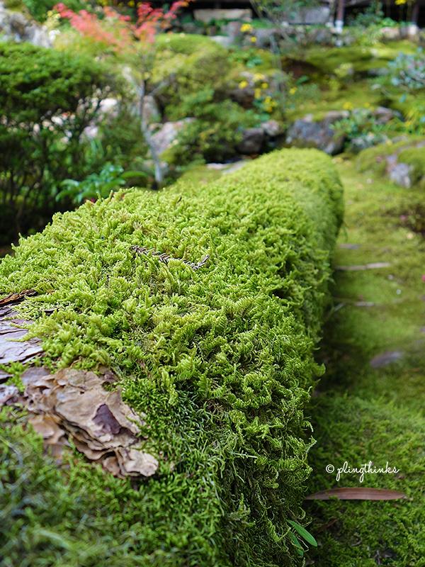 Tenjuan Garden Nanzenji - Moss