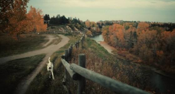 Dog-park-trails-river-Calgary-plintz-real-estate-realtor-marda-loop-altadore