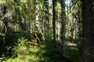 Blandskog