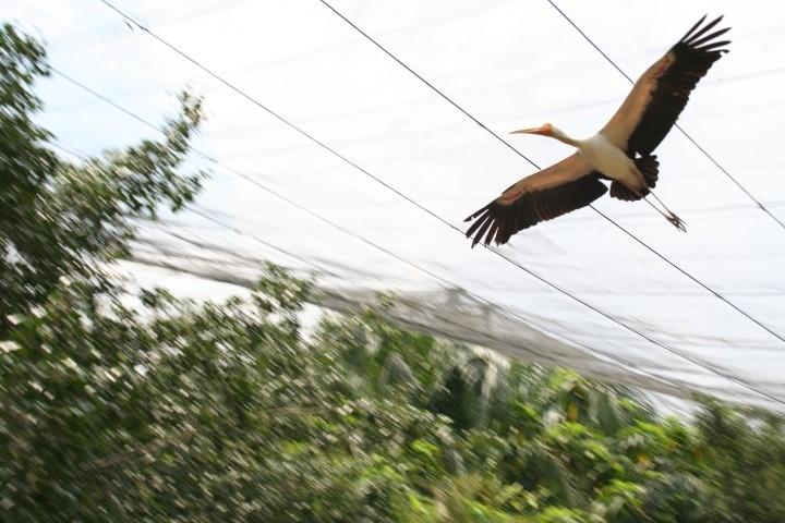 10-kl-bird-park-3