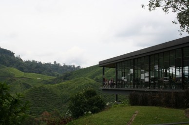 boh-tea-cameron-highlands-1