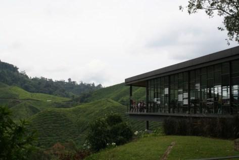 boh-tea-cameron-highlands-1