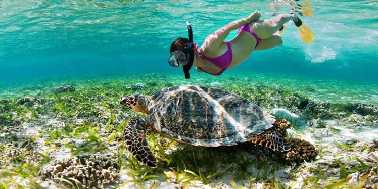 swim with the turtles Barbados