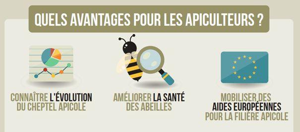 Pourquoi déclarer vos ruchers ?
