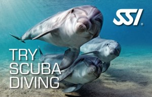 Carte de reconnaissance de Baptême de Plongée - SSI - Try Scuba Diving