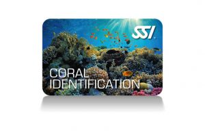 SSI - Coral Identification certification card