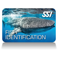 SSI - Fish Identification certification card