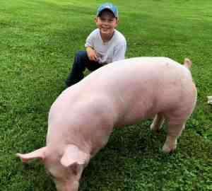 4-H kid with market hog project