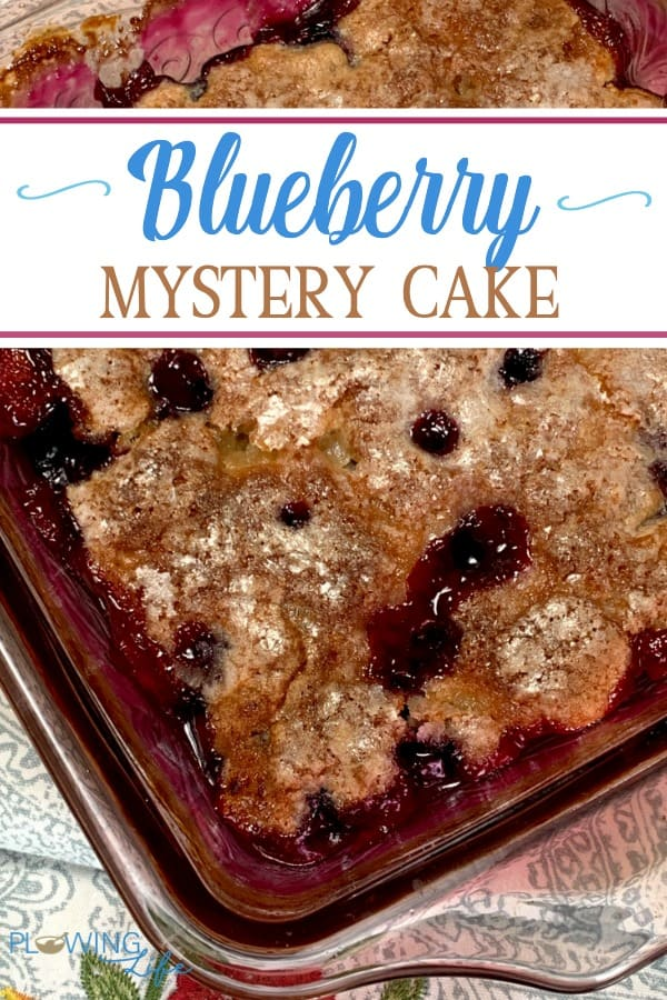 Fresh blueberries and a secret ingredient make this Blueberry Mystery Cake irresistible.  This small batch cake issweet, but not quite as sweet as a fruit cobbler.