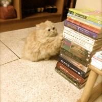 d.i.y. Cat Scratcher ที่ลับเล็บแมว by ส้มแป้น และ สามสี เมี๊ยวววว !!