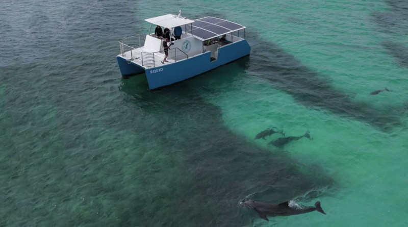A boat with solar panels is in sea green waters with dolphins surrounding it