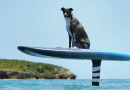 Gyroscopic e-foiling surfboard makes 'flying' easy for anyone
