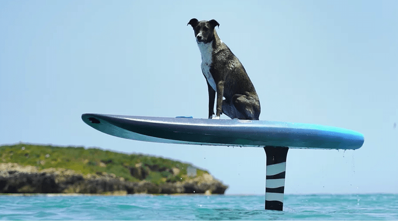 Gyroscopic e-foiling surfboard sitcking out of the water with a dog on it