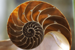 The Fibonacci Spiral can be found everywhere in nature.