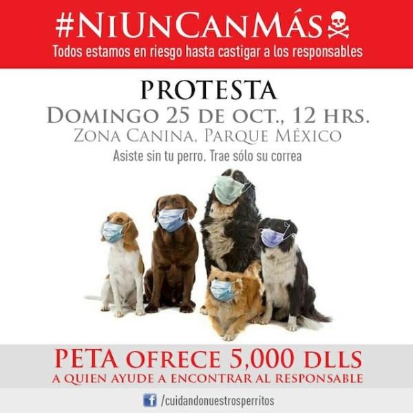 recompensa_perros