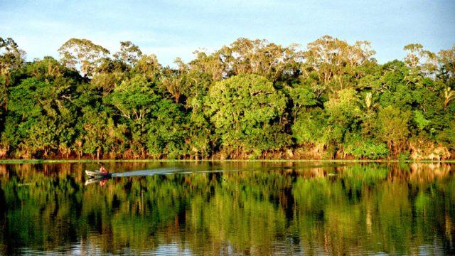 deforestacion-amazonia