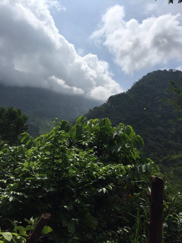 zoque selva