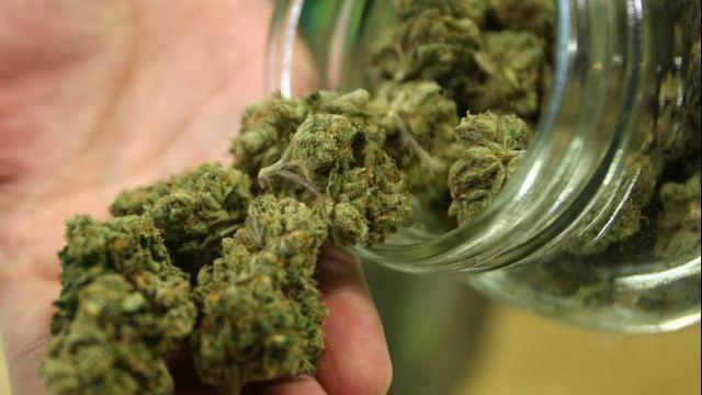 mariguana medicinal farmacia cofepris