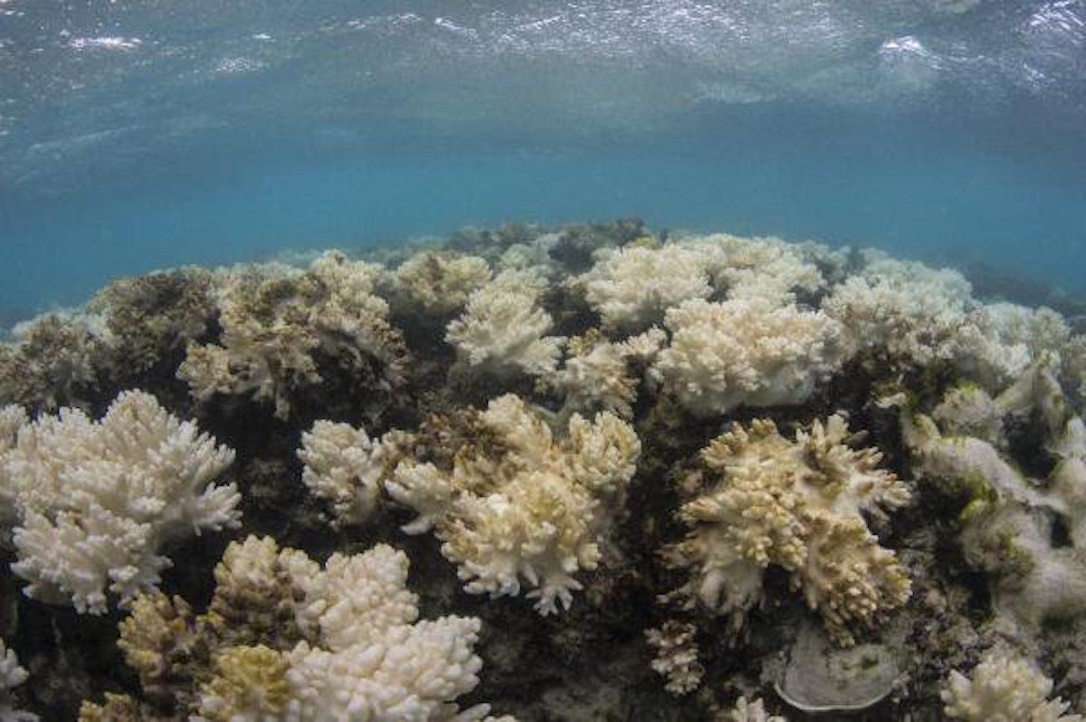 Destruimos, arrecife, grande, Gran Barrera, Coral, Australia