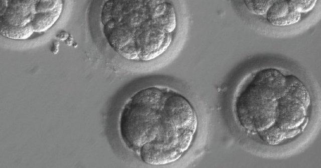 modificación genes embriones