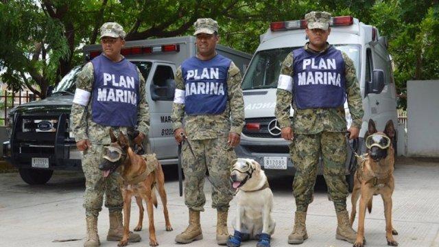 Marina perros de búsqueda y rescate en sismo