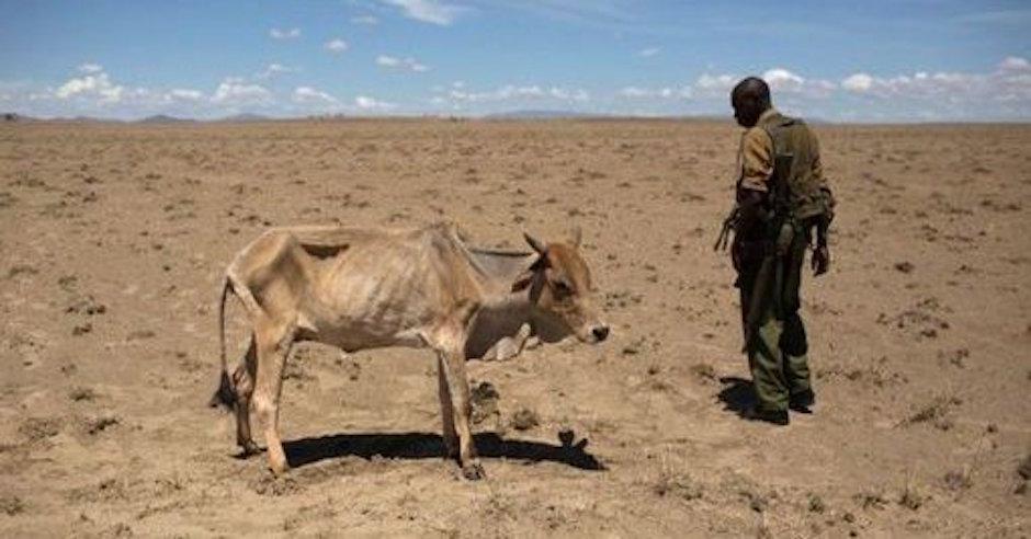 Sequía y hambruna afectan a el este de África