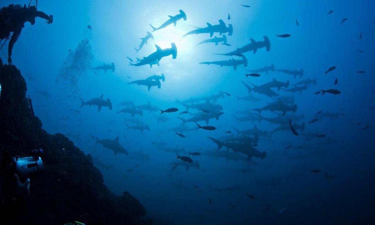 revillagigedo, semarnat, mar, parque nacional, colima, tiburones