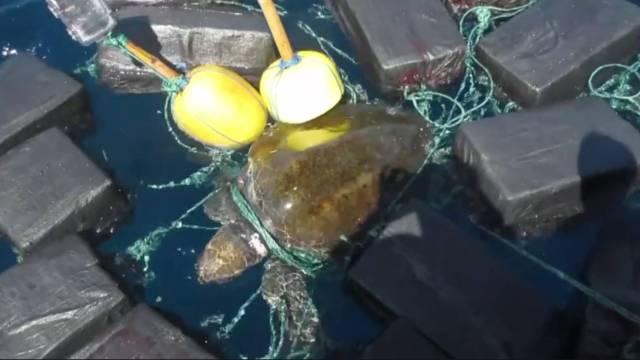 tortuga cocaína 800 kilogramos en el pacífico