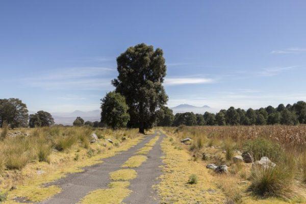 Camino de Ixtenco a la Malinche