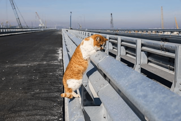 Móstik Gato Rusia Crimea Puente Putin