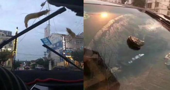 Llueven pulpos y estrellas de mar en ciudad de China