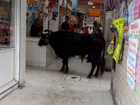 Se mete un toro al mercado de Tláhuac