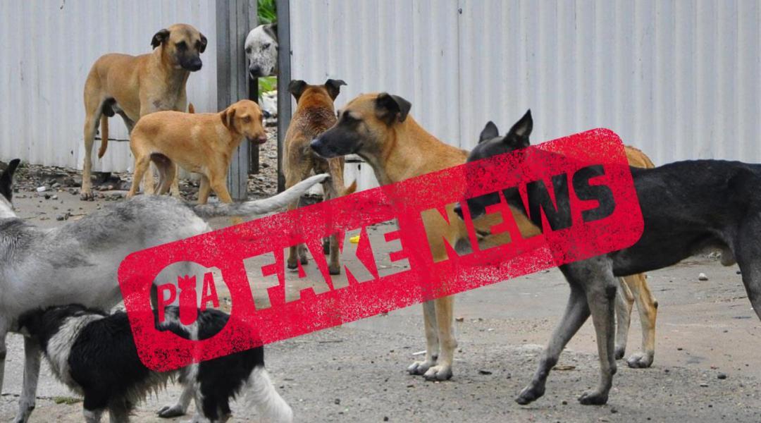 Falso: no aprobaron ley en Argentina para matar perros callejeros