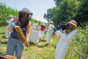 abejas, protección, colmena