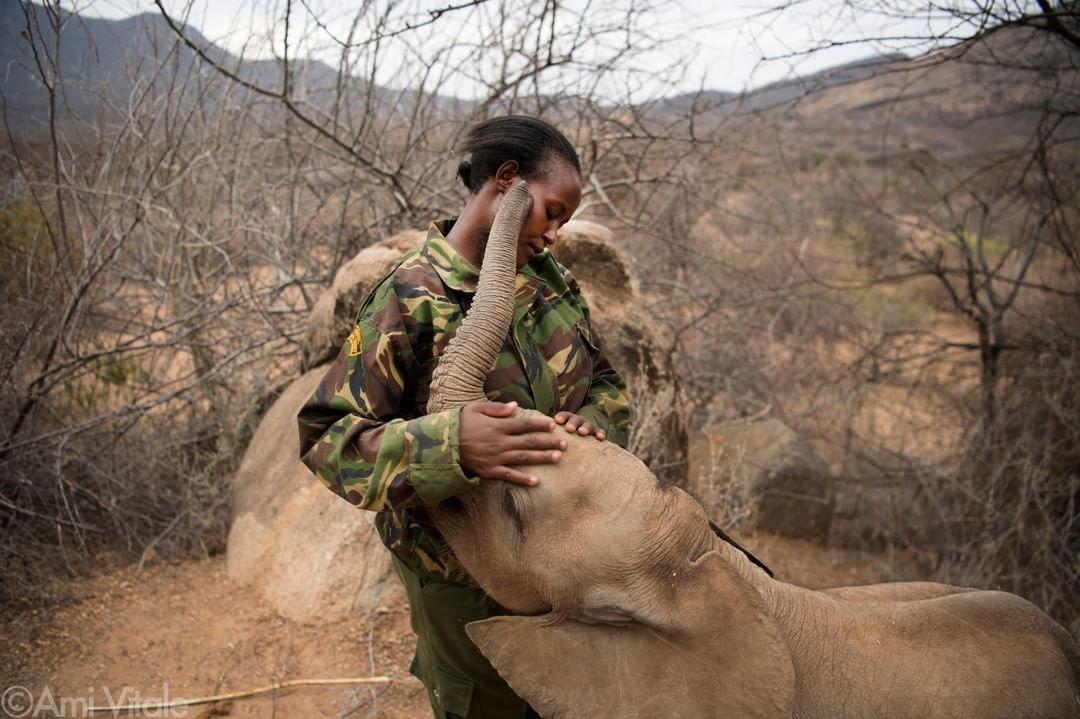 caza, elefantes, evolución