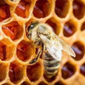 abejas, primavera, cuidado