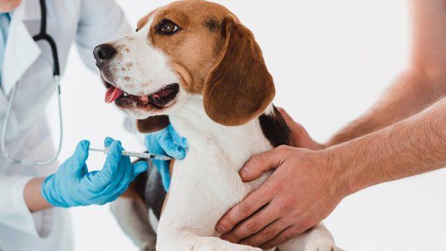 Anti vacunas alertan de autismo en perros