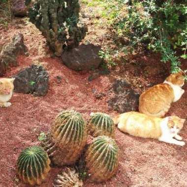 La biografía no autorizada de los 19 gatitos de Palacio Nacional
