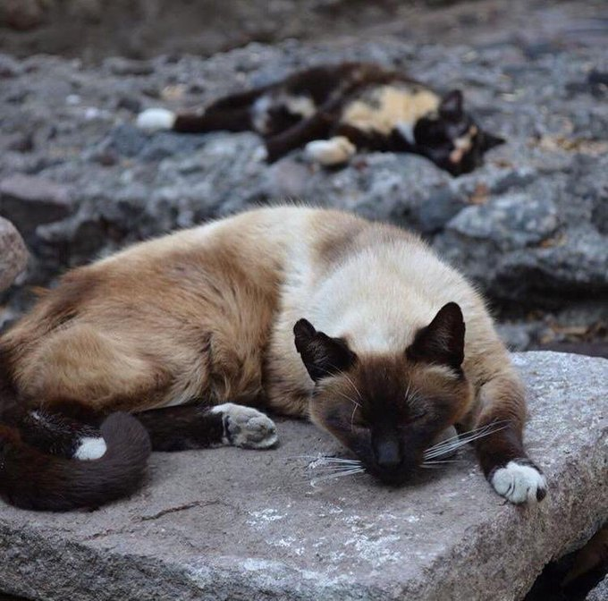 gatitos-palacio-nacional